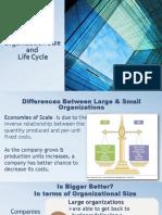 Organization Size Life Cycle