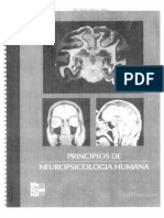 Principios-Neuropsicologia