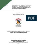 ReyesPáezDianaCatalina2017.pdf