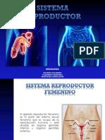 Sistema Reproductor