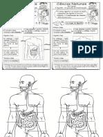 Sistema Digestório e Suas Funções - Resumo
