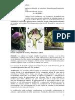 IMPRIMIR PARA EL SÁBADO 17.pdf