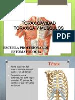 Anatomía Tórax