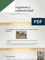 Neurognesis y Neuroplasticidad