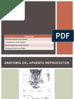 Presentacion Del Perro.pptx [Autoguardado]