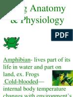 Frog Anatomy Physiology