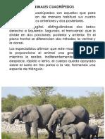 Animales cuadrúpedos.docx