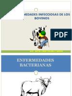 4 Enfermedadesbacterianasenbovinos