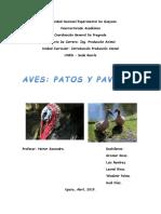 Patos y Pavos Ipa