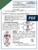 El Sistema Circulatorio 5