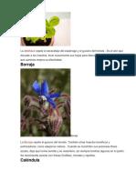 21 plantas repelentes