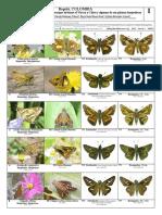 930 Colombia Mariposas y Polillas de Virrey y Chico