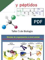 AA y péptidos- A. Martinez.pdf
