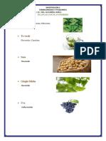 Plantas Con Flavonoides (1)