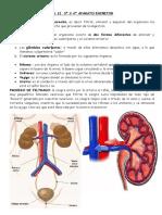 215505048-UD-3º-Y-4º-APARATO-EXCRETOR-pdf.pdf