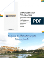 GAMETOGENESIS.pptx