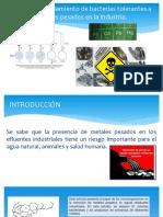 Detección y aislamiento de bacterias tolerantes a metales pesados en la industria.
