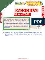 Cuidado de Las Plantas Para Primer Grado de Primaria