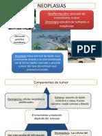 Patologia x Neoplasias 2