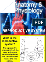 178 Anatomy Reproductive System