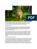 Crianza de Pollos Ecológicos