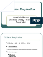 Cellular-Respiration.ppt