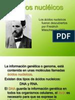 1 acidos nucleicos