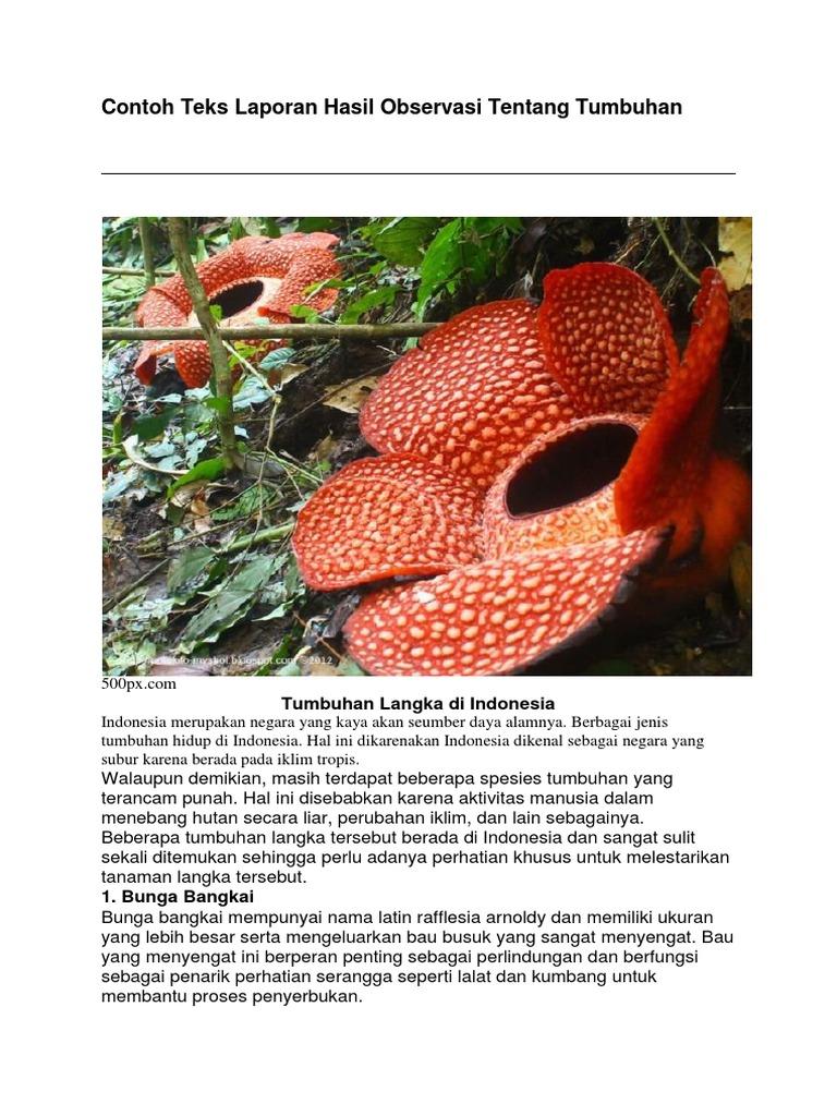 Contoh Teks Laporan Hasil Observasi Tentang Tumbuhan Tumbuhan Langka Di Indonesia
