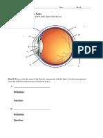 eye function notes