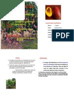 Manual Del Cultivo de Mango