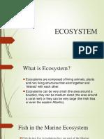 ECosystem Patricia