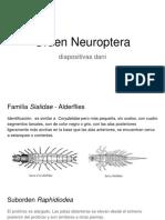 Orden Neuroptera