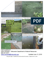 Blue-green Algae ID & Recreational Precautions 13June2019