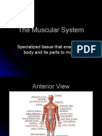 The Muscular System Powerpoint 1227697713114530 8