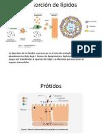Absorción de Lípidos, Prot y Vitaminas