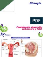 Fecundacion Desarrollo Embrionario y Fetal