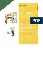 CAP 1 TORAX - Anatomía MOORE Resumen