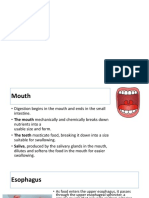Anatomi Sistem Pencernaan 1