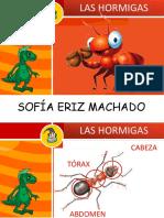 Expo La Hormigas
