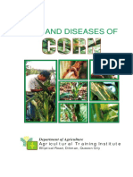 Corn Pest and Diseasses PDF