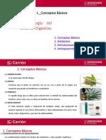 Farmacología Del Sistema Digestivo - Antiácidos y Antiulcerosos, Antiespasmódico