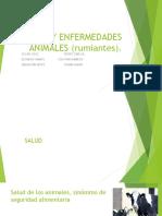Salud y Enfermedades Animales (Rumiantes) Expo