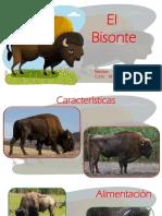 Bisonte.pptx