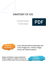Anatomy of Gis