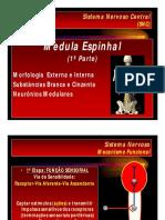 Microsoft PowerPoint - Aula 04 - Medula Espinhal 1ªParte 2012.Ppt [Modo de Compatibilidade]