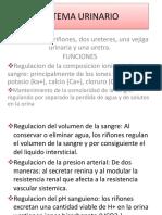 ANATOMIA DEL SISTEMA URINARIO.pptx
