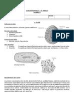 GUIA 7mo - CCNN - La célula.docx