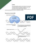 Reparación de DNA