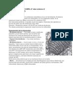 Ciclo de Krebs y Respiración Oxidativa