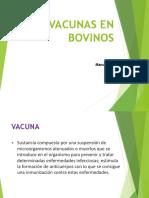 Vacunas en Bovinosasd